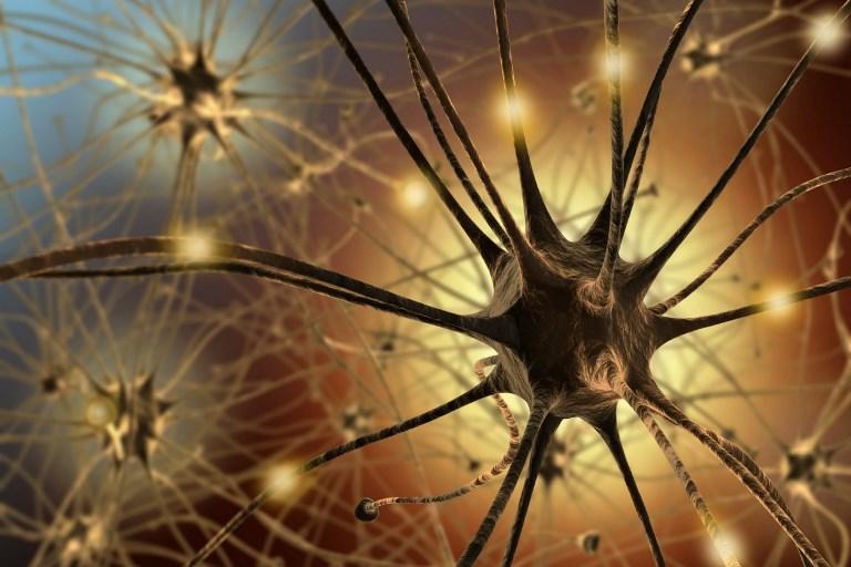 Нейроны отвечают за активность мозга