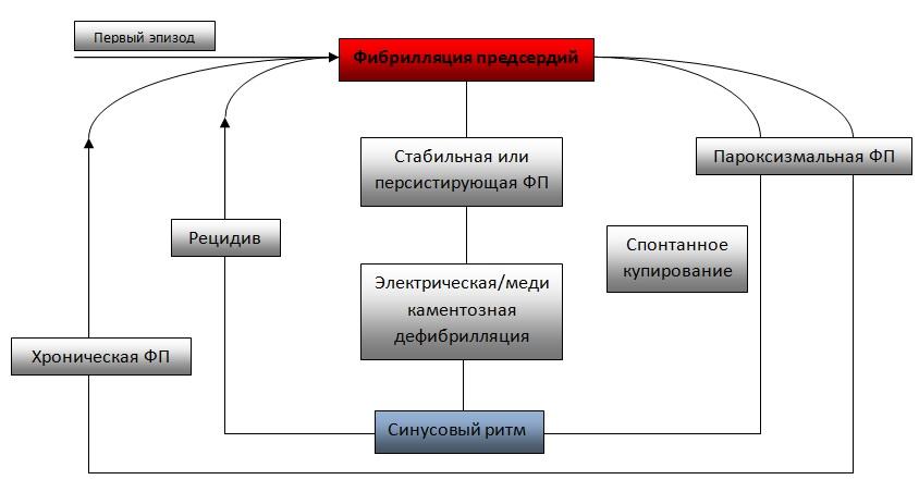 Схема классификации мерцательной аритмии