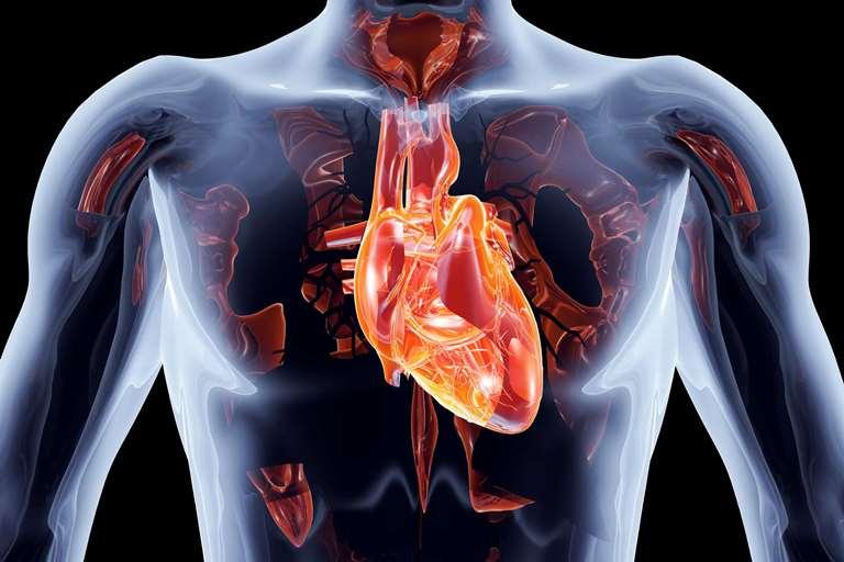 Врожденная патология может стать причиной появления аритмии сердца