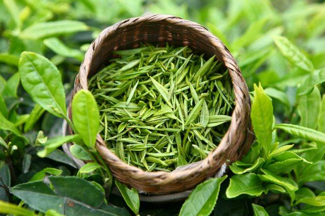 Несушенные листья чая