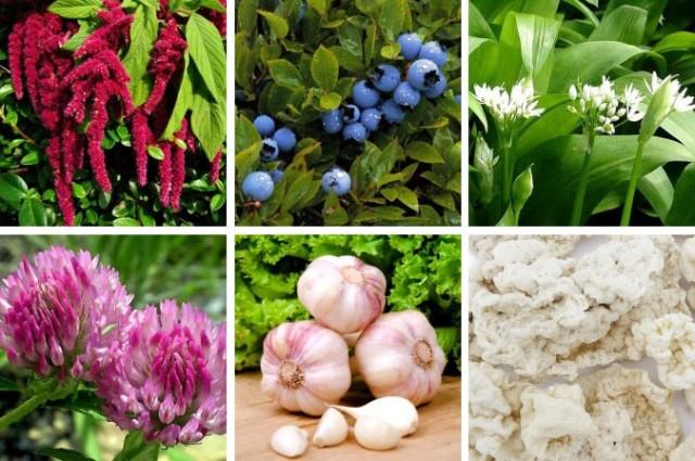 В этом растении содержится вещество сквален, эффективно понижающий содержание холестерина