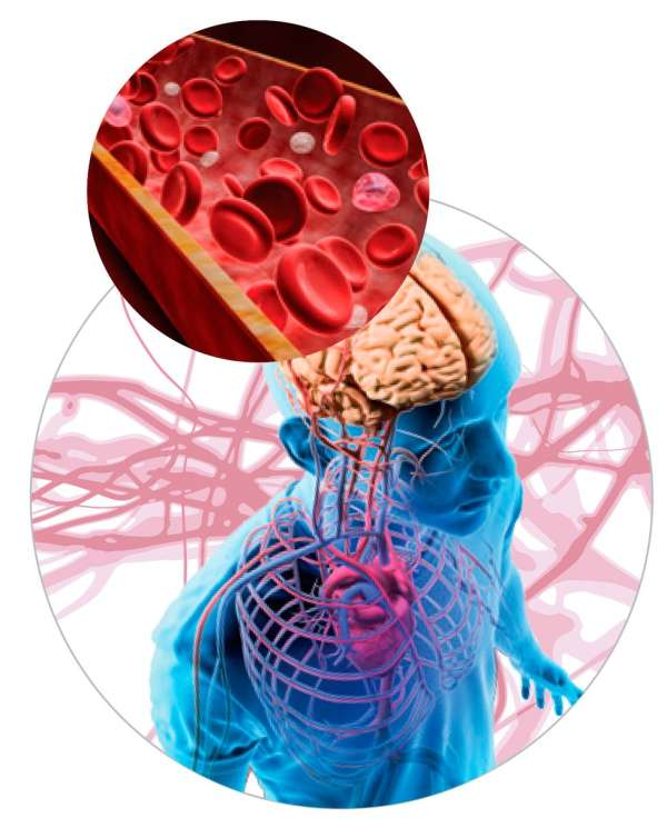 Непрерывный процесс обеспечения тела человека кислородом происходит благодаря дыхательной системе и транспортным элементам кровотока