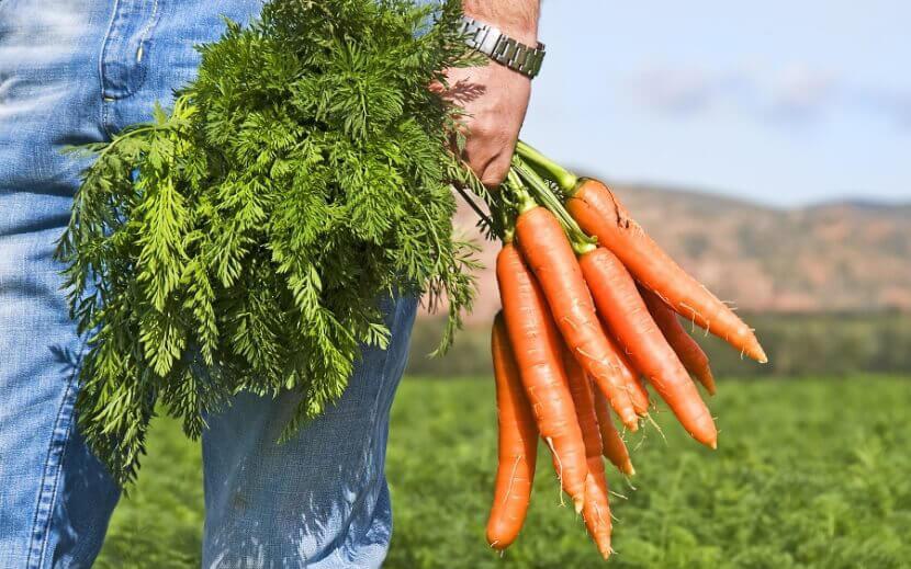 При передозировке средств с морковной ботвой могут наблюдаться сонливость, лихорадка, недомогание, желтушность кожи и слизистых оболочек