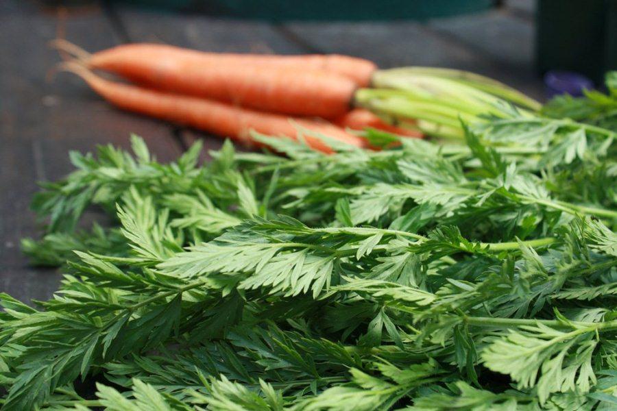 Морковь содержит большое количество витаминов