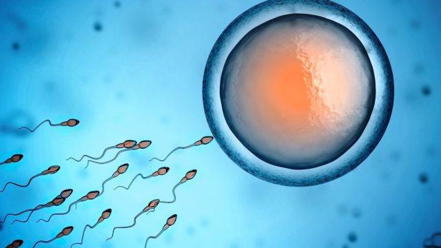 На способность к оплодотворению могут повлиять разные факторы, варикоцеле лишь одно из них